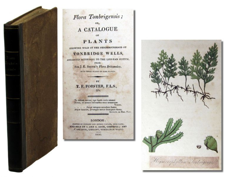 Flora Tonbrigensis; Or A Catalogue of Plants Growing Wild in the Neighbourhood of Tonbridge Wells Arranged According to the Linnean System From Sir J.E. Smith's Flora Botanica. T. F. Forster.
